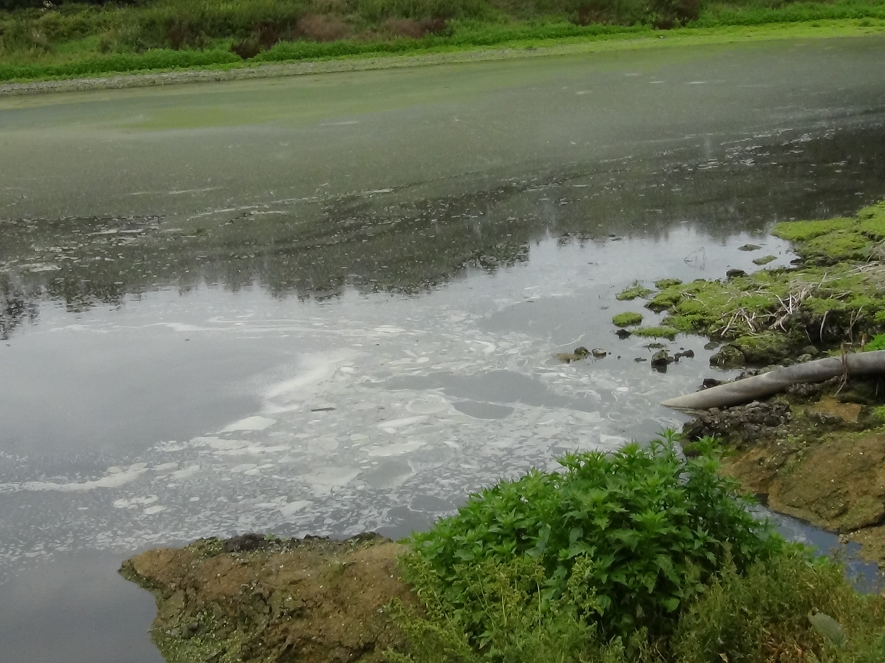 A picture of a pipe depositing waste into a lagoon on Crouchland Farm