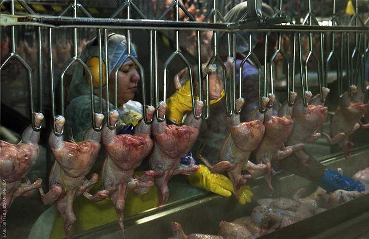 An image of a worker hanging chicken at a poultry processing plant in Montgomery, Alabama