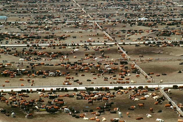 Aerial view of world's largest cattle feedlot (120,000 head). Monfort beef, CO